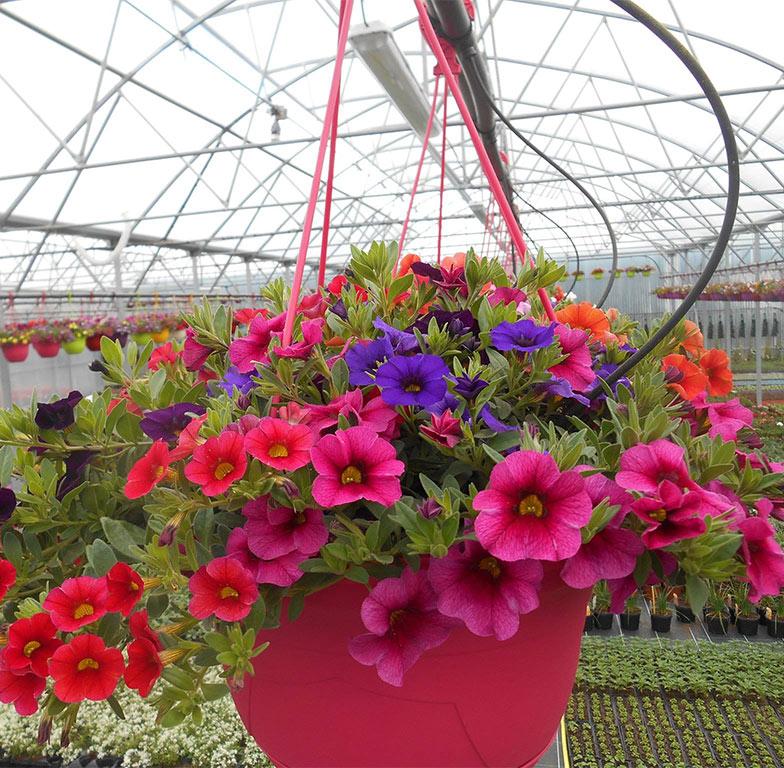 photo fleur 3